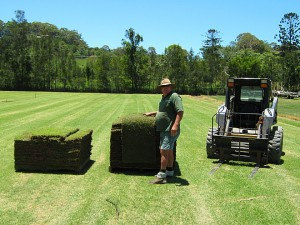 Maka and pallets of turf