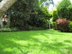 Soft Leaf Buff In garden, piknik
