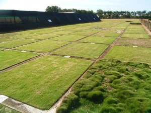 different types of turf