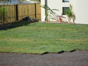 leading edge when laying turf
