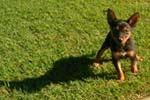 dog-lawn-th