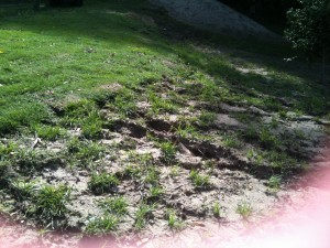 Green couch compared to clumping grass for erosion control