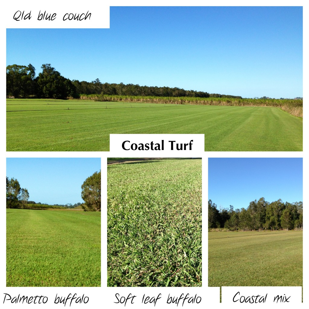 Coastal Turf's grasses