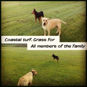 Keith and Indy. The Turf dogs. Perfect to trail the grass for your 4 legged family members.