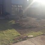Putting down the new Lawn