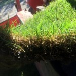 Turf Slab Thickness